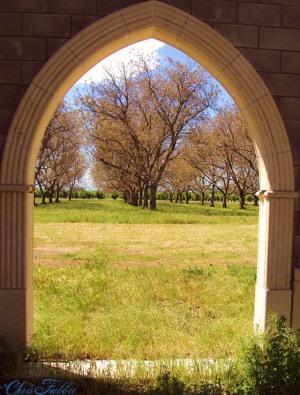 New Clairvaux vine yards, Vina Sacred Stones 1