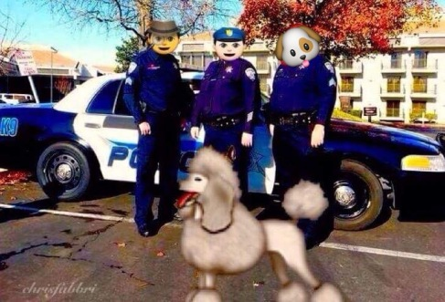 The Poodle Patrol on the block
