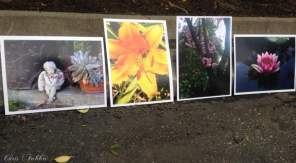 """Garden photography by Chris Fabbri 8""""x10"""" glossy paper color prints"""